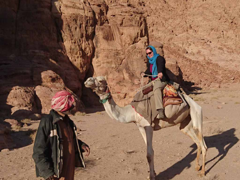 Camel Jordan Wadi Rum Beduin Dromedary
